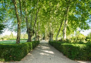Propriété viticole à vendre de 6 HA - Vallée du Rhone - 1841CDR - fr