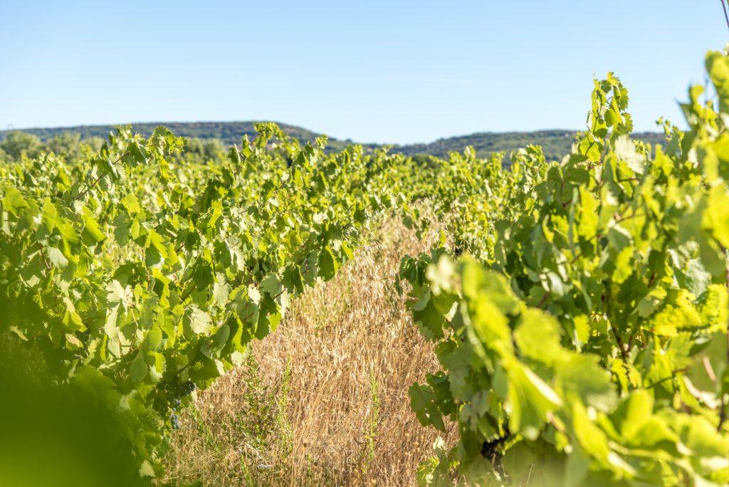 Propriété viticole à vendre de 8 HA - Languedoc - 1866LR - fr
