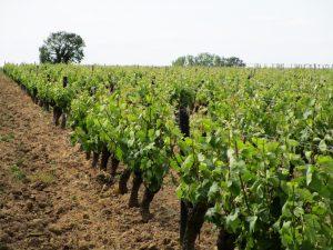 Propriété viticole à vendre de 8 HA - Loire - 18168 - fr