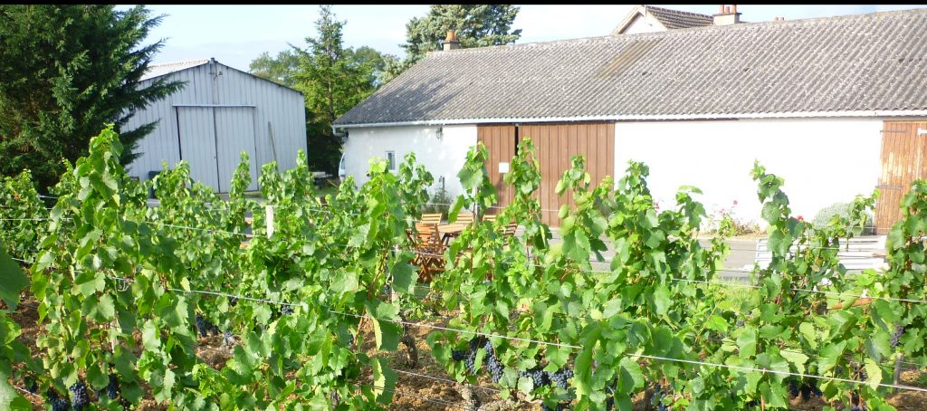 Propriété viticole à vendre de 9 HA - Loire - 14001 - fr