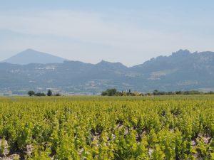 Propriété viticole à vendre de 9 HA - Vallée du Rhone - 1833CDR  - fr