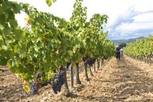 Propriété viticole à vendre de 92 HA - Vallée du Rhone - 1992CDR  - fr