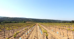 Vigne à vendre de 19.5 HA - Vallée du Rhone - 1753CDR - fr