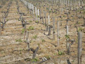 Vigne à vendre de 3.68 HA - Bordeaux - 18069 - fr