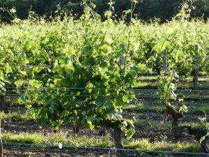 Vigne à vendre de 7.41 HA - Bordeaux - 13057 - fr