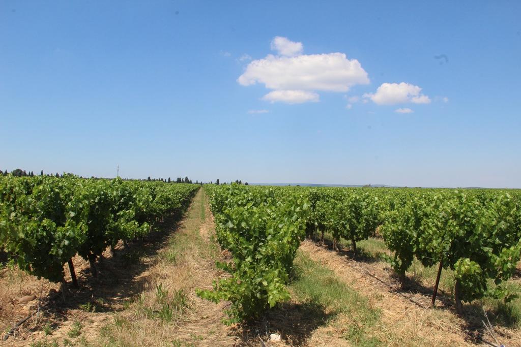 Vineyards to sell of 33 HA - Vallée du Rhone - 1965CDR - en