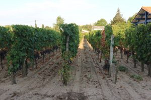 Wine Estates to sell of 0.68 HA - Bordeaux - 18240 - en