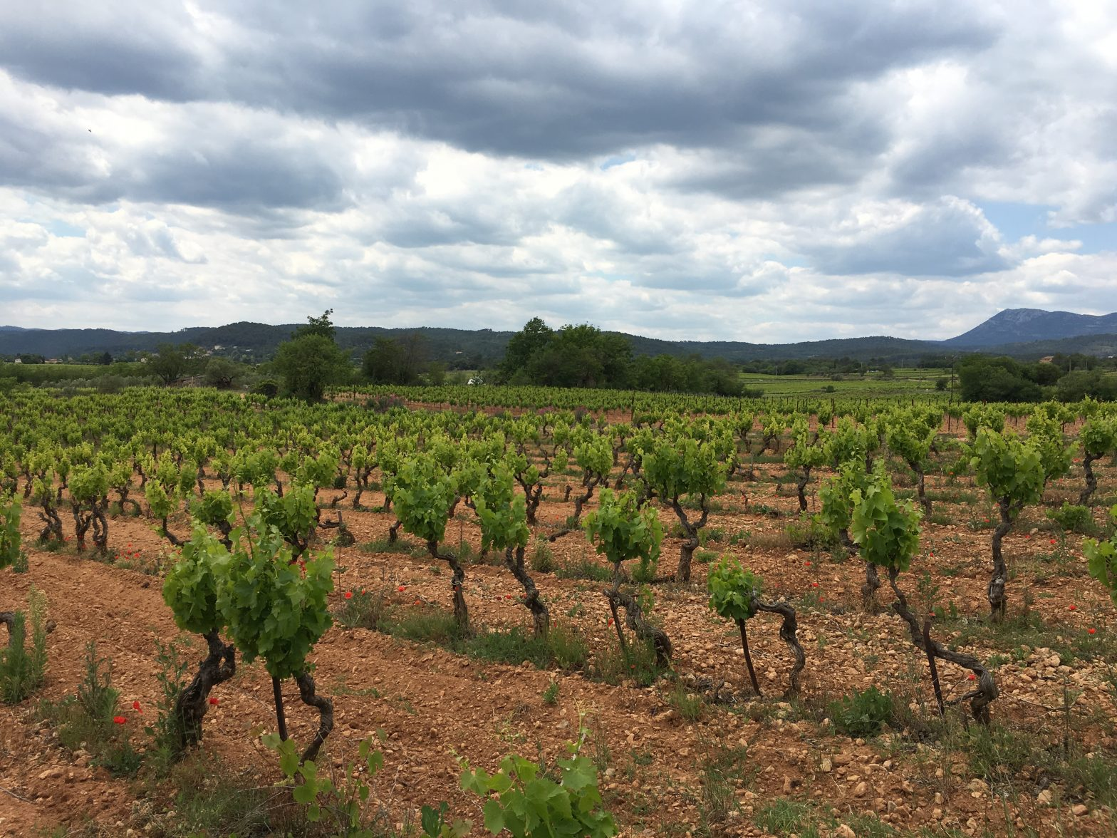 Wine Estates to sell of 12 HA - Provence - 365P - en
