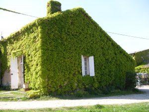 Wine Estates to sell of 16 HA - Bordeaux - 9092 - en