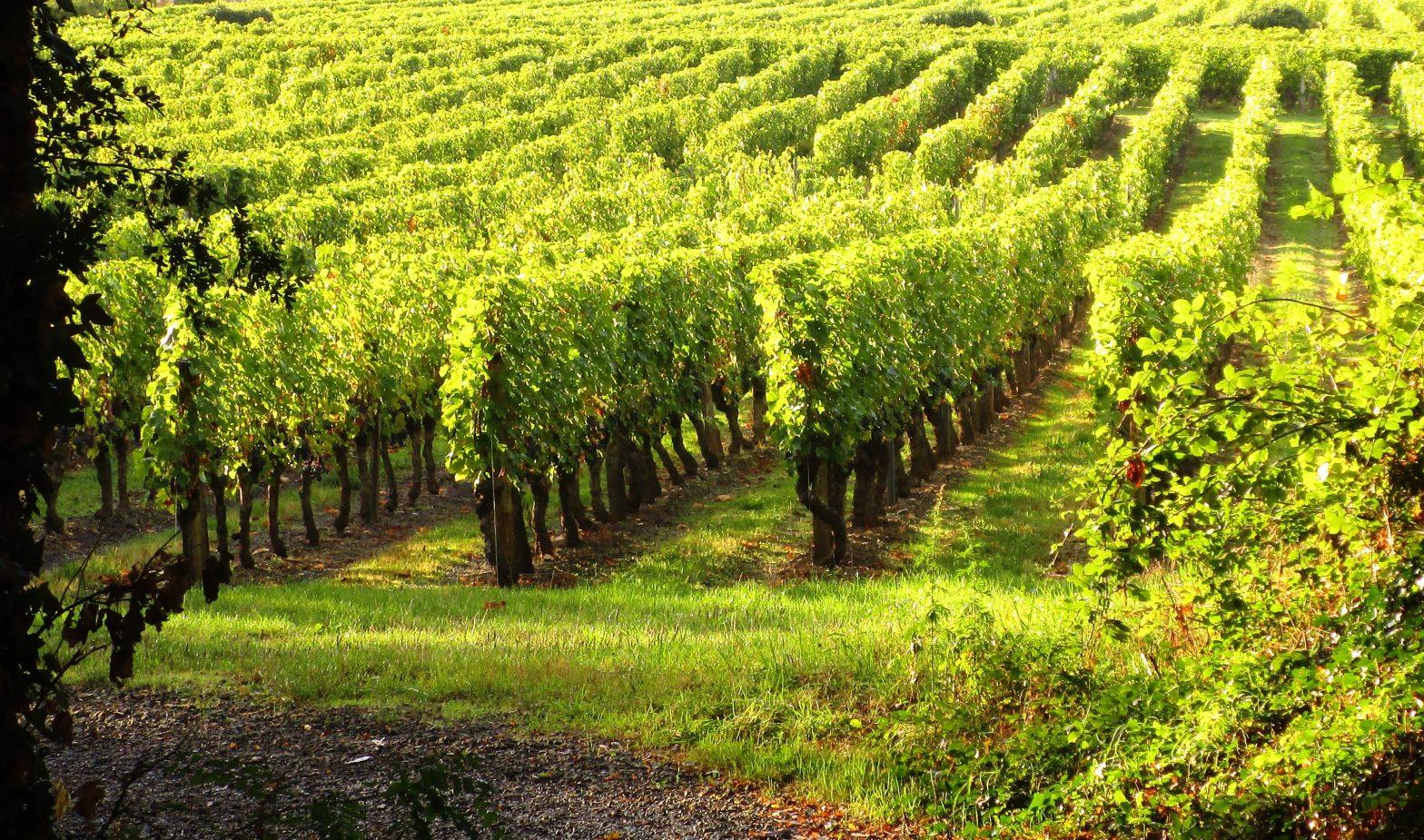 Wine Estates to sell of 17 HA - Loire - 17063 - en