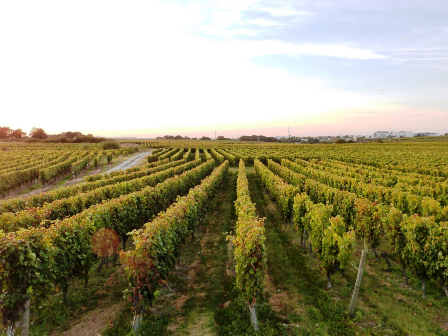 Wine Estates to sell of 17 HA - Loire - 18184 - en
