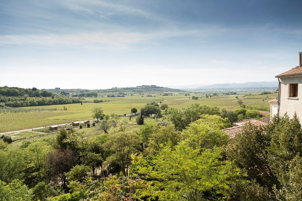 Wine Estates to sell of 18 HA - Languedoc - 577BISLR - en