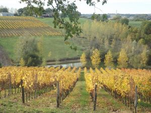 Wine Estates to sell of 20 HA - Bordeaux - 9081 - en