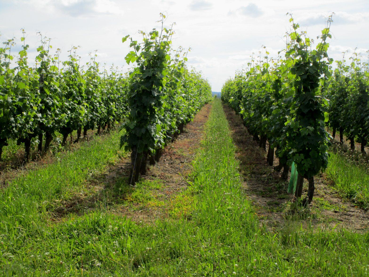 Wine Estates to sell of 23 HA - Loire - 17094 - en