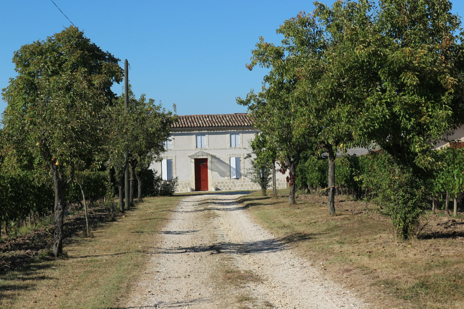 Wine Estates to sell of 24 HA - Bordeaux - 18191 - en