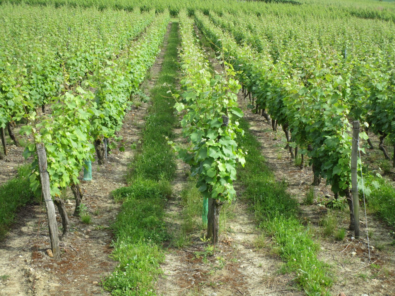 Wine Estates to sell of 24 HA - Loire - 17287 - en