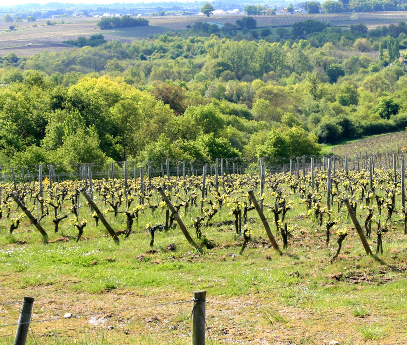 Wine Estates to sell of 25 HA - Loire - 17148 - en