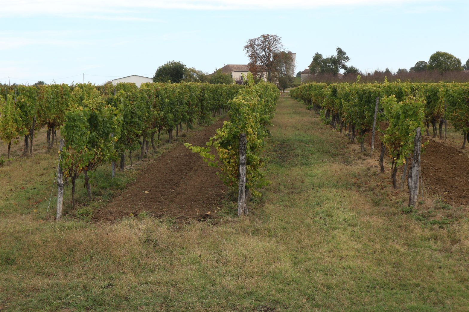 Wine Estates to sell of 29 HA - Bordeaux - 18238 - en