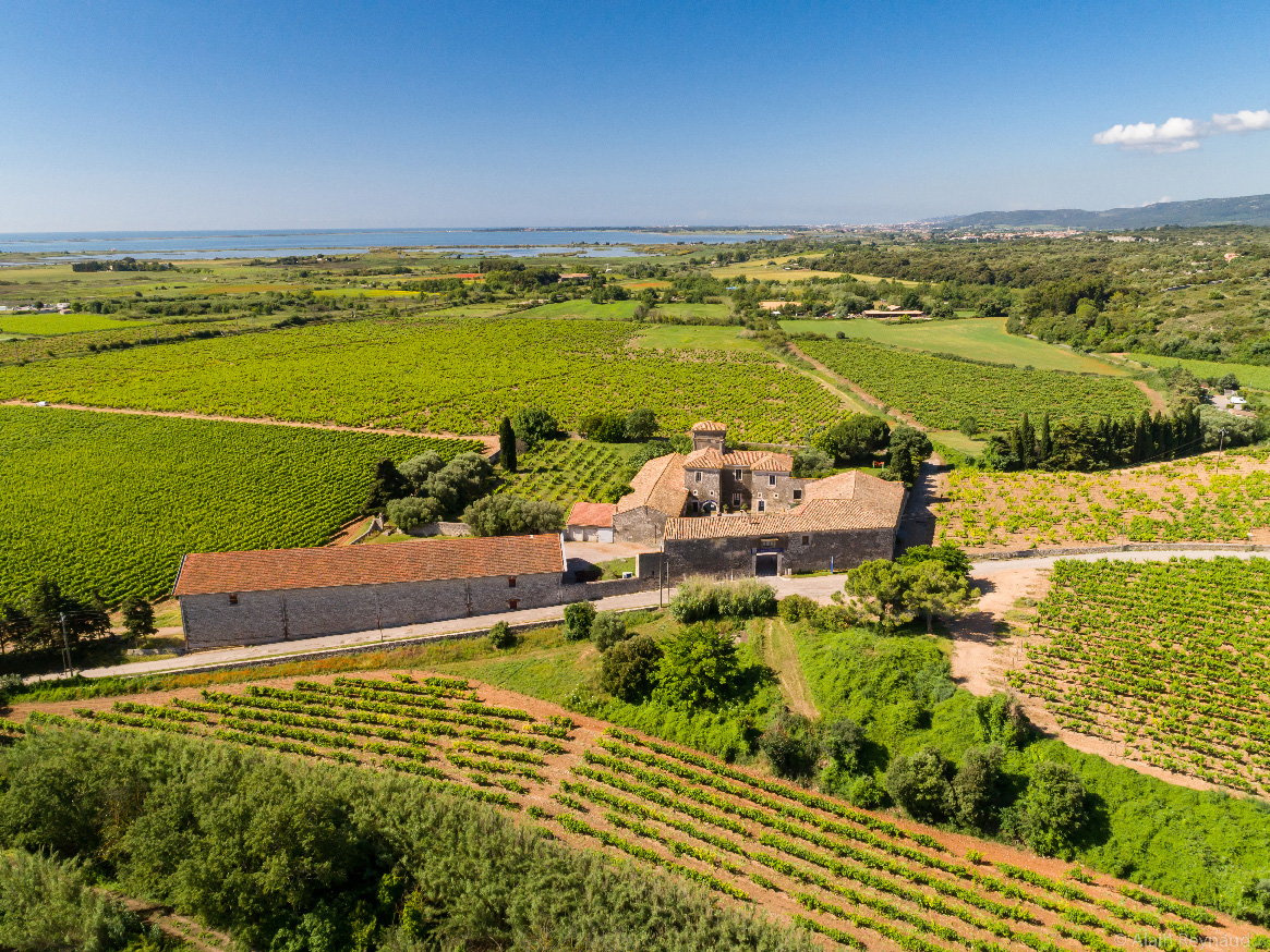 Wine Estates to sell of 40 HA - Languedoc - 1787LR - en
