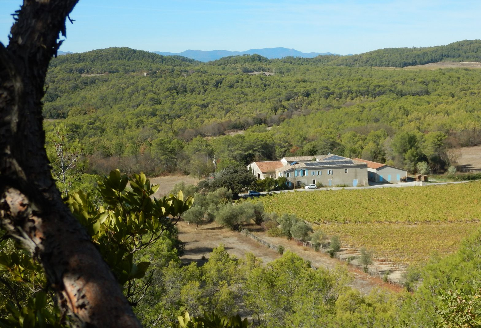 Wine Estates to sell of 40 HA - Languedoc - 1826LR - en
