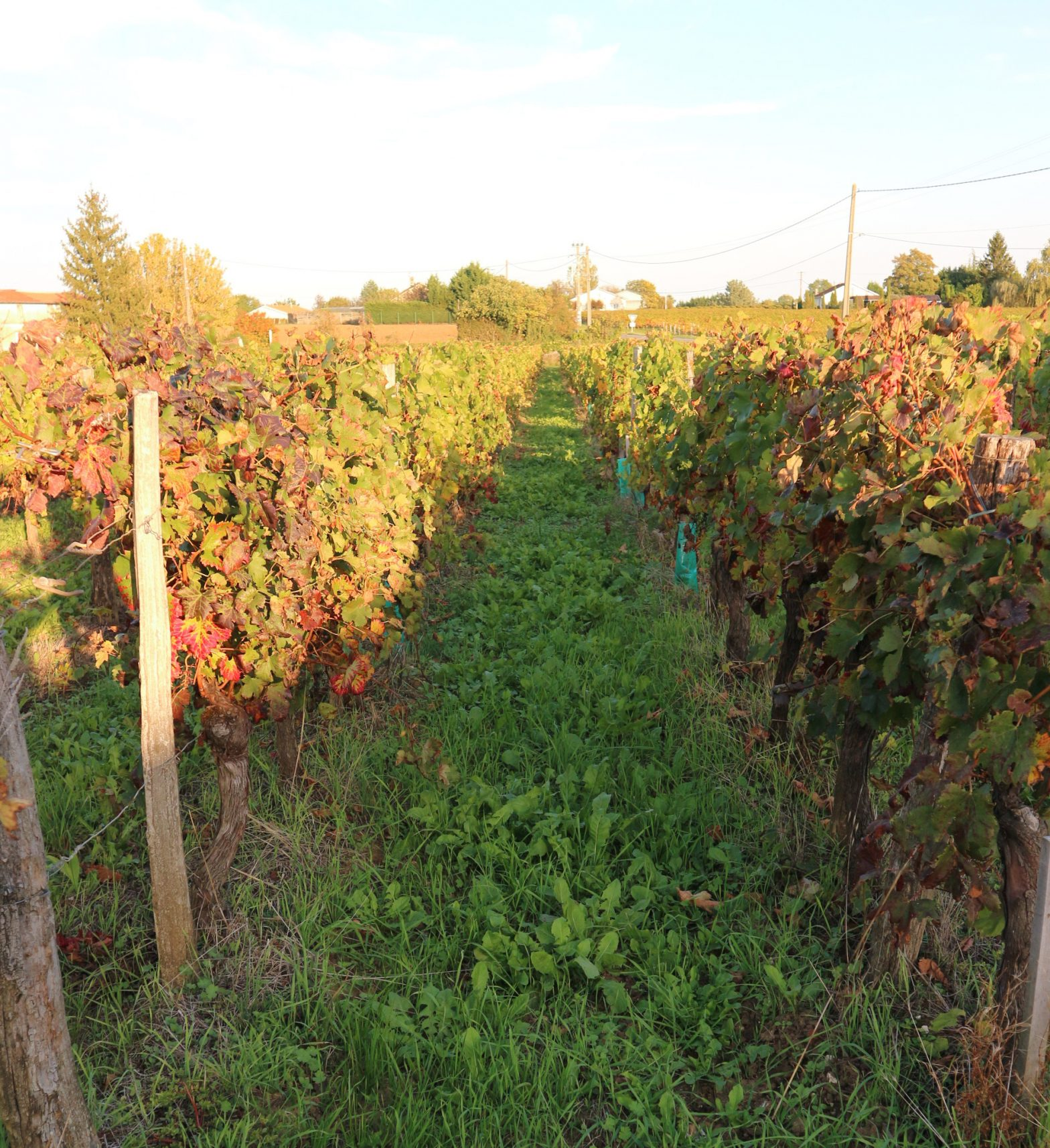 Wine Estates to sell of 7 HA - Bordeaux - 18189 - en