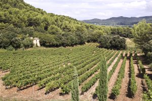 Wine Estates to sell of 92 HA - Vallée du Rhone - 1992CDR  - en