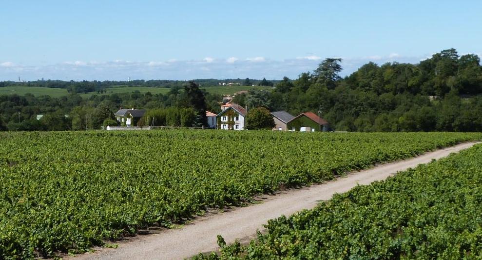 Vente domaine viticole val de loire