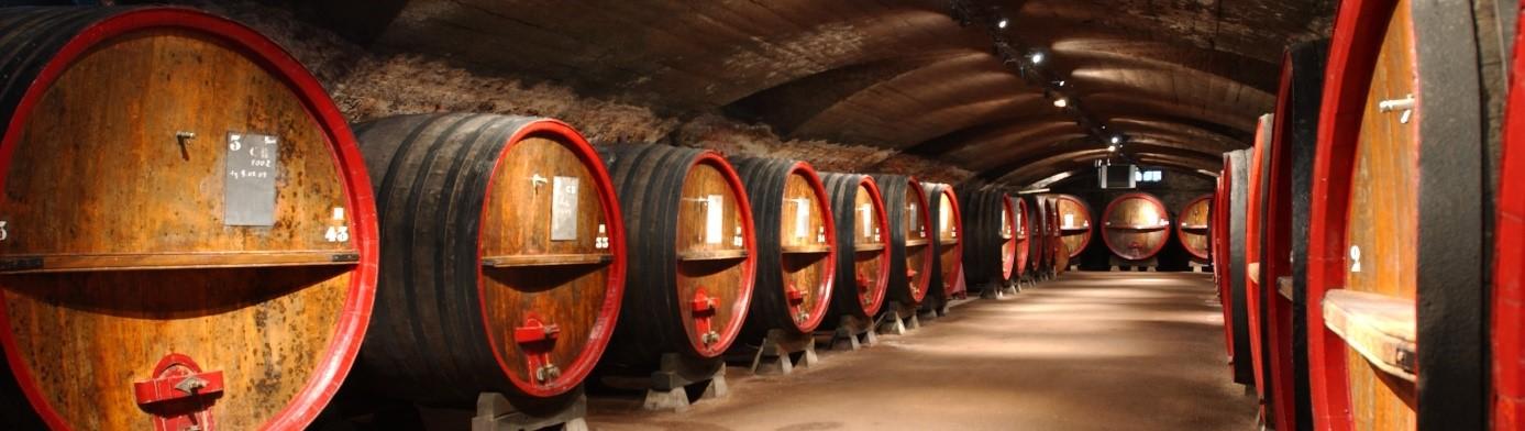 Chai à barrique dans un domaine viticole