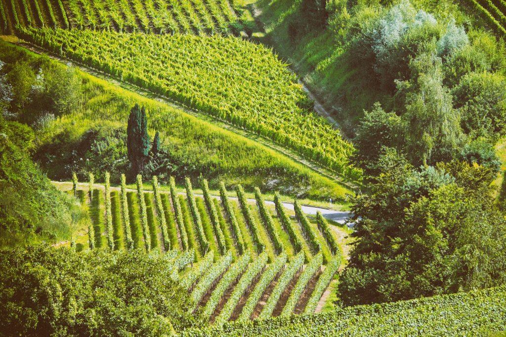 parcelles de vignes au cœur d'un environnement naturel