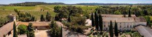 Domaine viticole paysage