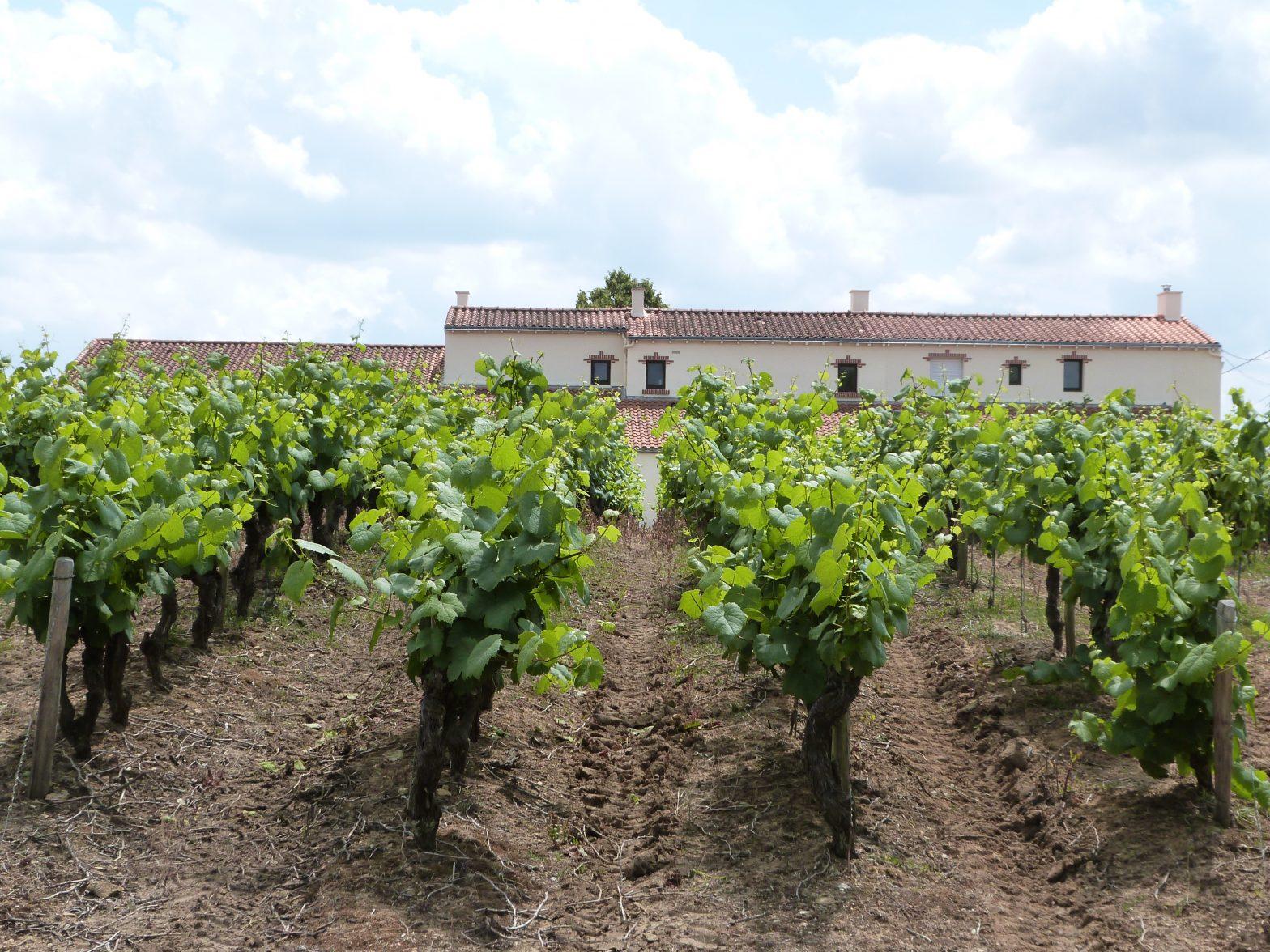 Découvrez un bien d'exception : Domaine viticole sur environ 20 ha - Dentelles de Montmirail. Vinea Transaction vous accompagne dans l'acquisition de ce bien remarquable !